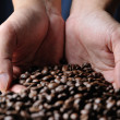 Stock Photo: Cofee grains