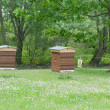 Beekeeping in green park — Stock Photo