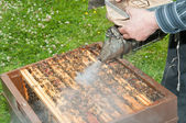 Beekeeper spraying the hives — Stock Photo