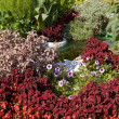 Flowerbed with coleus - Stock Photo