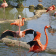Pink flamingo — Stockfoto #10770752