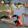 Foto de Stock  : Pink flamingo