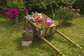 Flowerbed made as carriage with flowers — Stock Photo