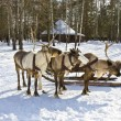 Carriage with deers — Stock Photo #10805215