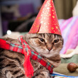 Funny fat cat wearing a party hat and a scarf — Stock Photo