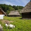 Stok fotoğraf: Traditional wooden houses
