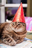 Funny fat cat wearing a party hat — Stock Photo