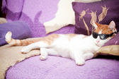 Funny ginger cat wearing sunglasses and relaxing on a coach — Stock Photo