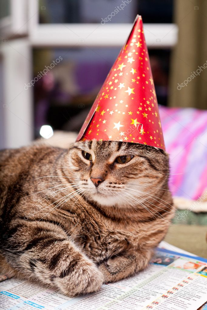Funny fat cat wearing a party hat — Stock Photo ...