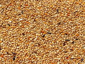 Seed mixture background. Pet food for birds. (finches) — Foto de Stock