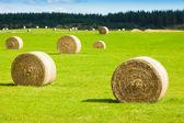 Hay bale rolls in a green field — Stock Photo