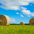 Round hay bales in a green field - Stock Photo