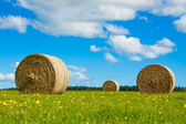 Round hay bales in a green field — Stock Photo