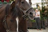 Equestrian Team in the street — Stockfoto