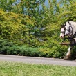 Horses at Stanley Park in Vancouver, Canada — Stock Photo #12070197