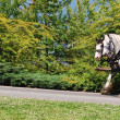 Horses at Stanley Park in Vancouver, Canada - Stock Photo