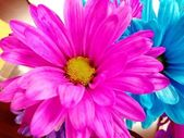 Pink and Blue Flower — Stock Photo