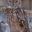 Grand Duke Owl — Stock Photo #10801714