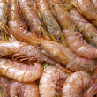 Prawns - Stock Photo