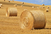 Straw bales on corn fields after harvest — Stock Photo