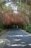 Road in garden — Stock Photo