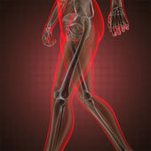 Human radiography scan — Fotografia Stock