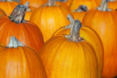 Pumpkins Lined up. — Stock Photo
