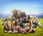 Group of animals — Stock Photo