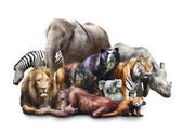Grupp av djur — Stockfoto