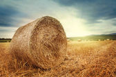 Round bales of straw — Stock Photo
