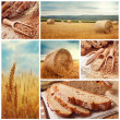 Stock Photo: Bread and harvesting wheat