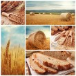 Bread and harvesting wheat — Stock Photo