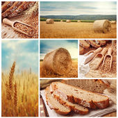 Bread and harvesting wheat — Stok fotoğraf
