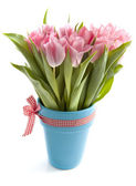 Special tulips — Stock Photo