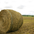 Hay roll — Stock Photo #11488038