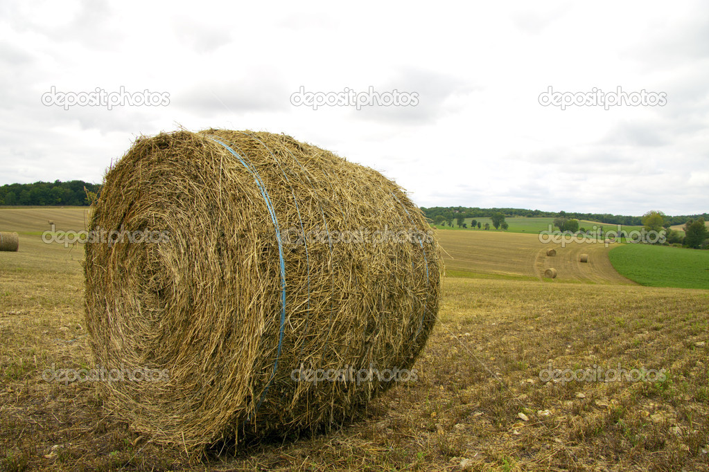 Landscape with hay rolls on a cloudy day — Stock Photo #11488038