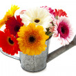 Colorful gerbera — Stock Photo #11592668