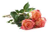 Belle rose — Foto Stock