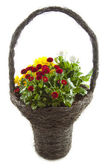 Decorative flower basket — Stock Photo