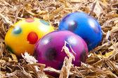 Grappige eieren — Stockfoto