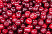 The background of red cherry fruit — Stock Photo