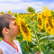 Stock Photo: Boy smelling sunflower
