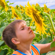 Boy smelling a sunflower — Stock Photo