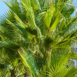 Palm leaves against the blue sky — Stock Photo