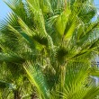 Palm leaves against the blue sky — Stock Photo #12399975