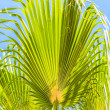 Palm leaves against the blue sky — Stock Photo #12400184