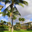 Stock Photo: Palm trees and condos, Maui