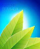 緑の自然の葉の背景 — ストックベクタ