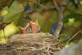 Yiyecek arayan kuş — Stok fotoğraf