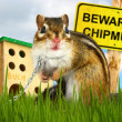 Ridiculous malicious chipmunk — Stock Photo